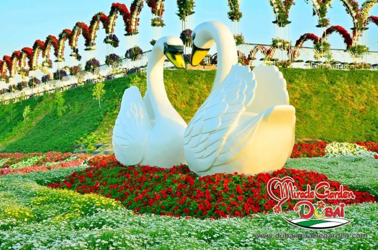 los emiratos rabes unidos est compuesto por siete emiratos y los enormes corazones de flores en este jardn mgico representan esta rentable unin