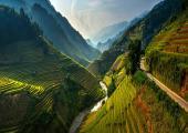 dos mil hectareas terrazas arroz