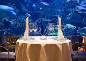 cenar restaurante rodeado especies marinas